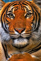 ... Zoo Blick II ...