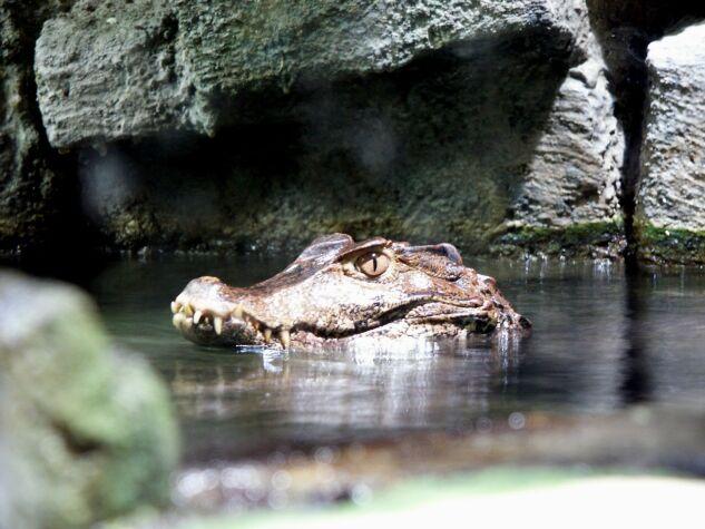 Zoo Bochum Bild 2