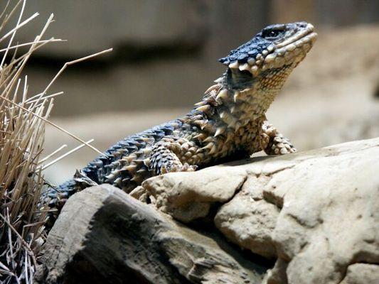 Zoo Bochum Bild3