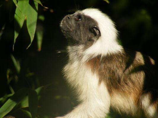 Zoo de Pont-Scorff (2)