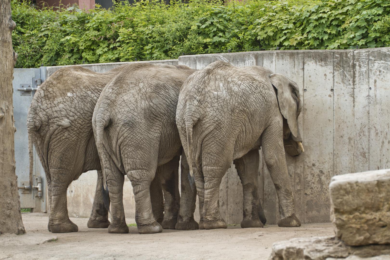 Zoo Erfurt