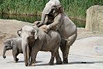 Zoo Erotik