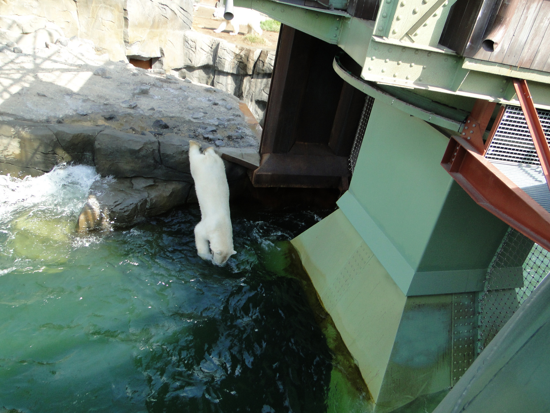 Zoo Hannover - Der Eisbärköpper