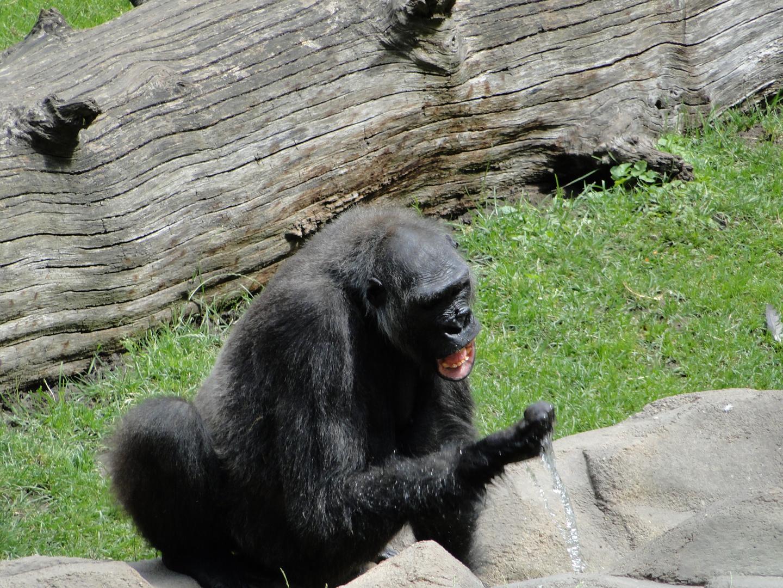 Zoo Hannover - Die affenstarke Erfrischung