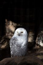 Zoo Hannover Oktober 2012 #11