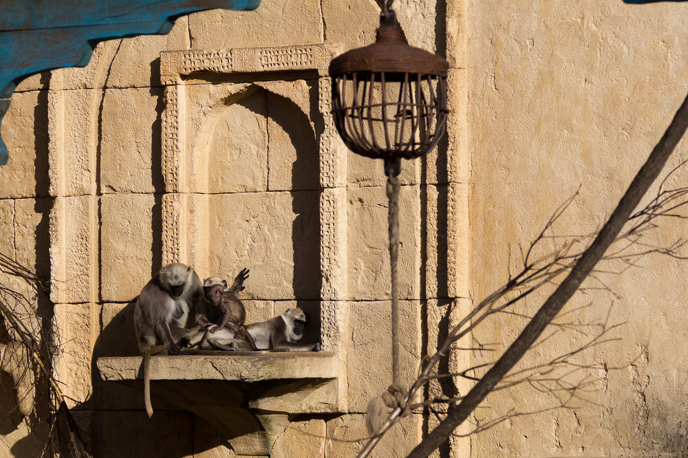 Zoo Hannover Oktober 2012 #13