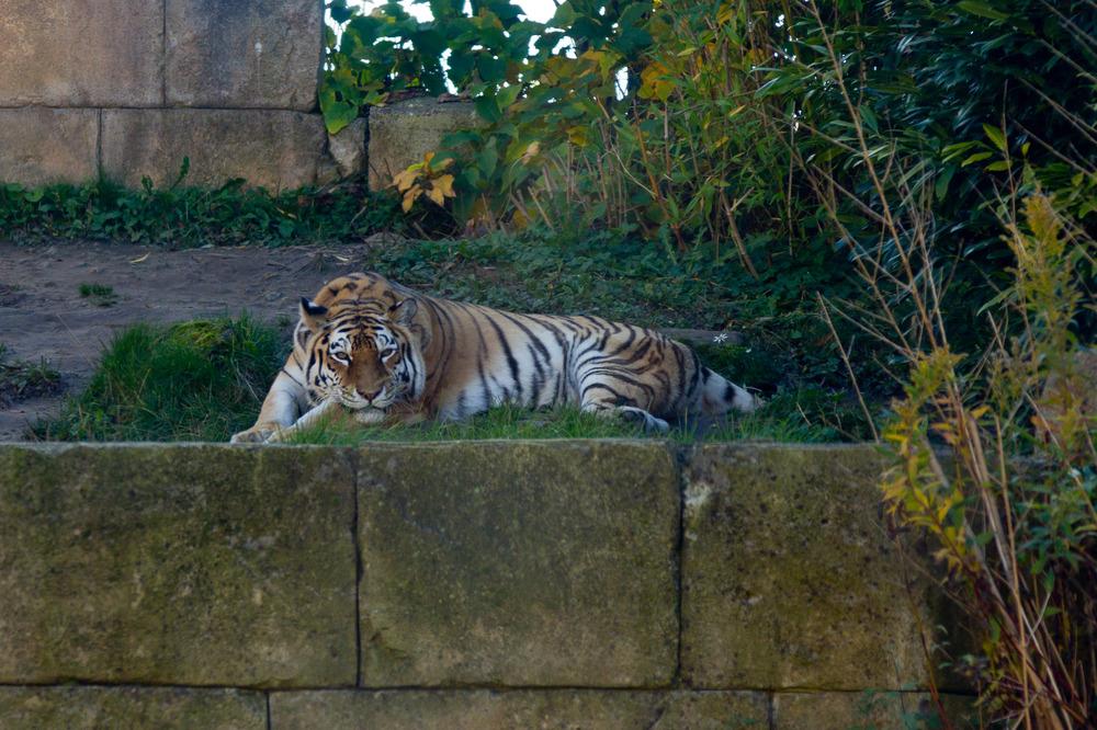 Zoo Hannover Oktober 2012 #14
