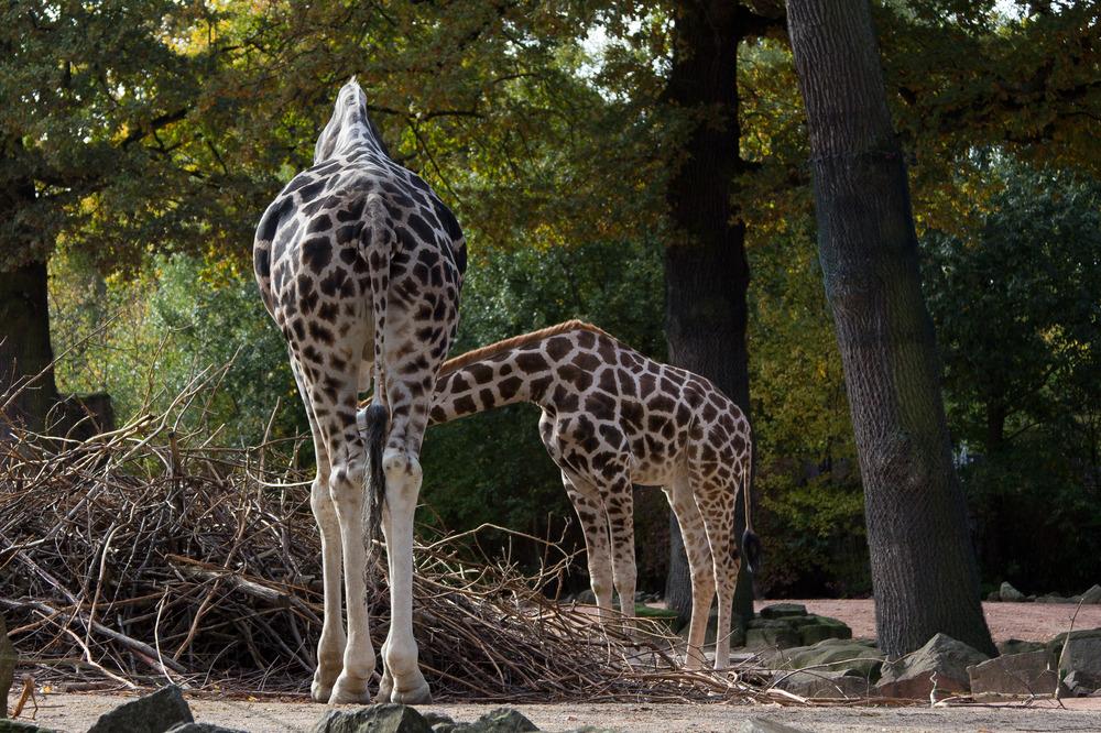 Zoo Hannover Oktober 2012 #2