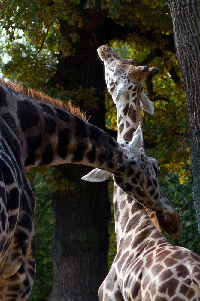 Zoo Hannover Oktober 2012 #3