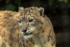 Zoo Hellbrunn 5
