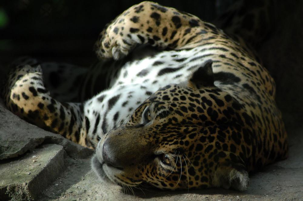Zoo in Paramaribo