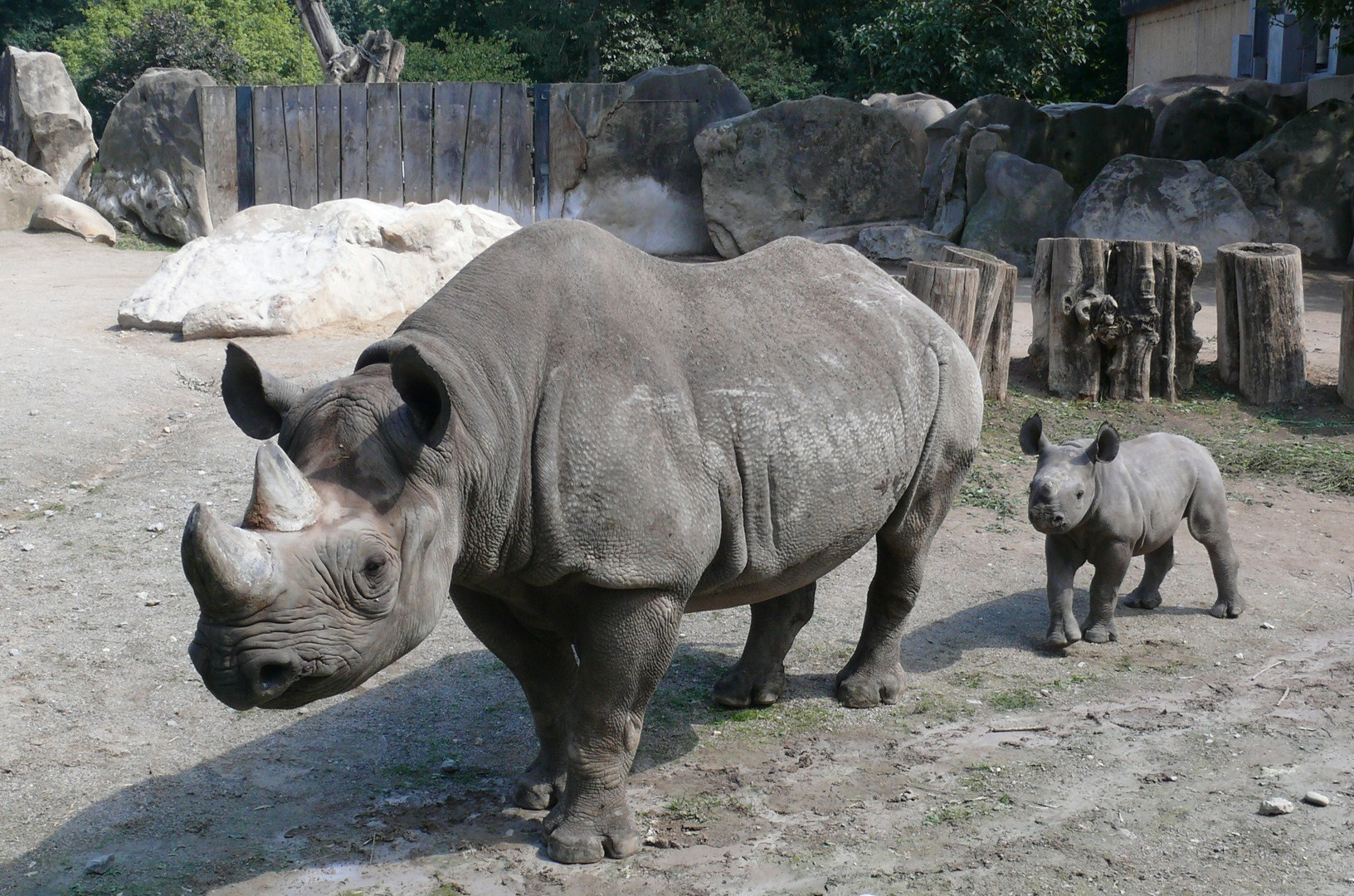 Zoo Krefeld / Kibibi mit ihrer Mama