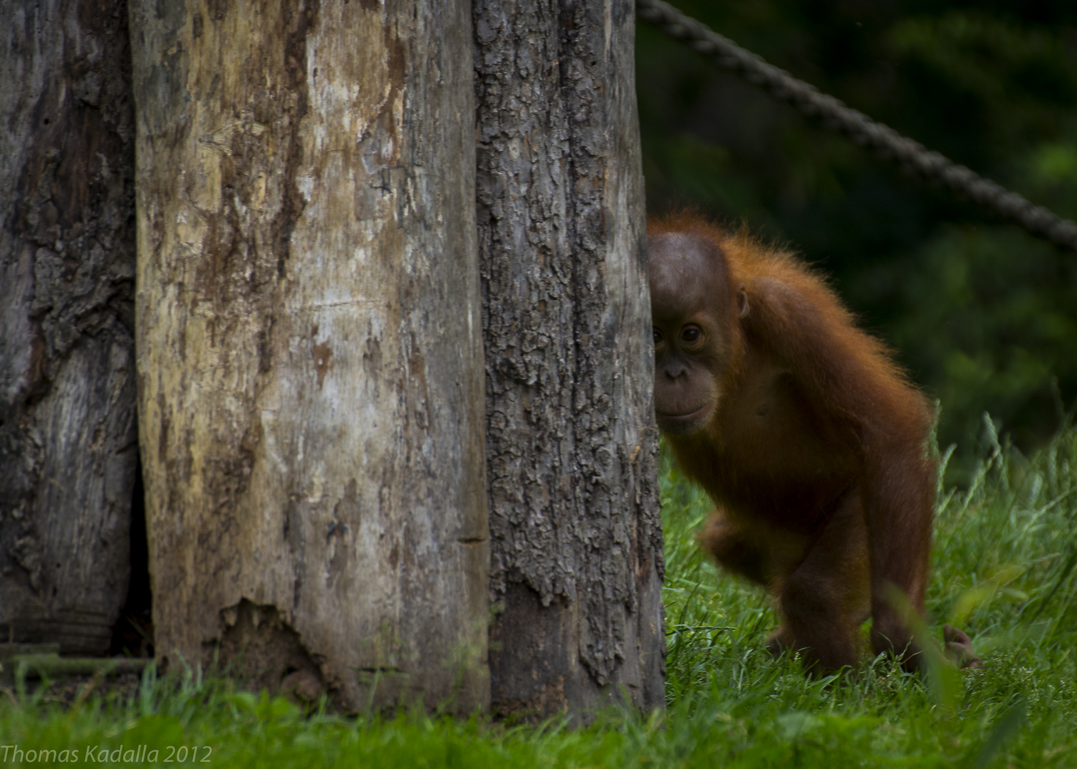 Zoo Leipzig neugieriger kleiner Affe