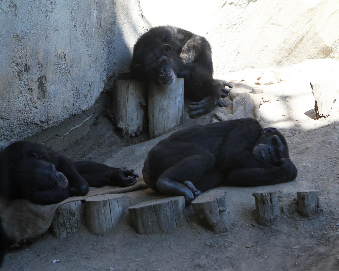 Zoo Leipzig: nu is schon Oktober ... und das Wetter macht immer noch soooo müde ....