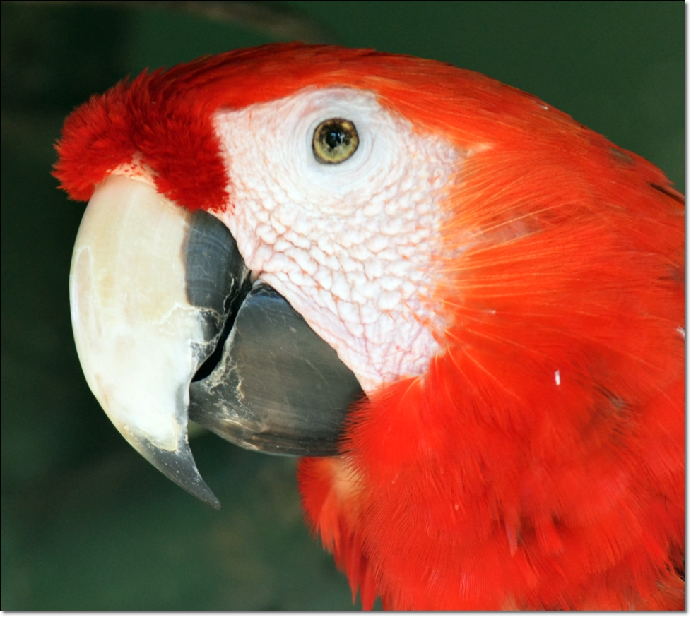 Zoo Managua 1