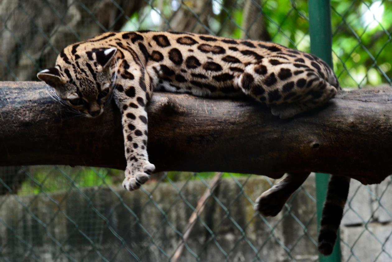 Zoo Managua