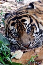 Zoo Melbourne.... immer im Auge behalten.