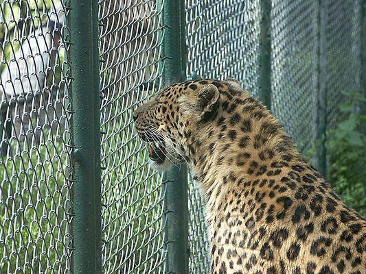 Zoo Neunkirchen