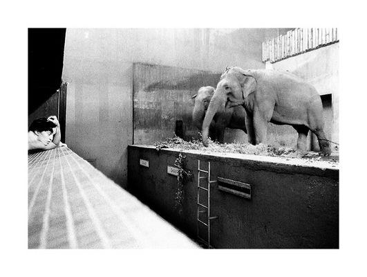 Zoo, Prague 2004