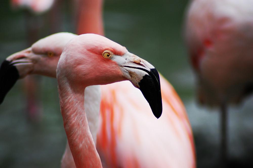 Zoo Sbg.Hellbrunn