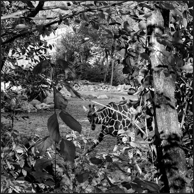 Zoo-Suchbild Nr. 2