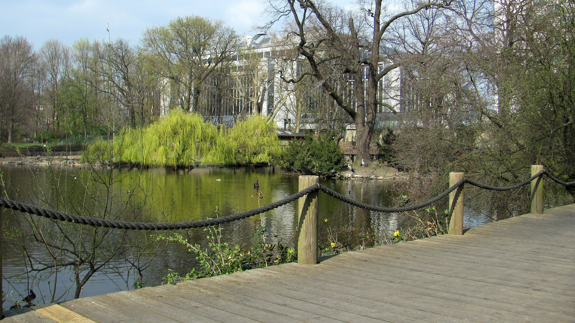 Zoo-Teich im Frühling