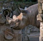 Zoo Ueno 9