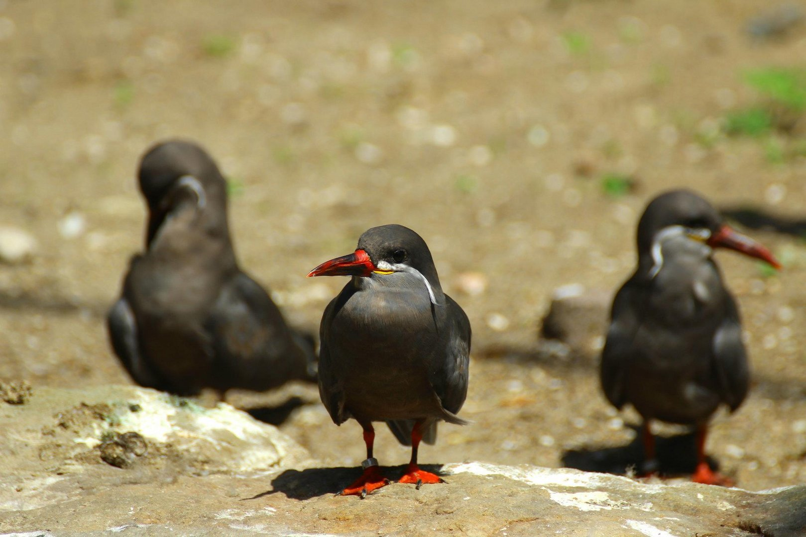 Zoo Vögel