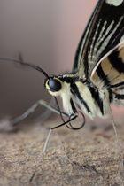 Zoobesuch im Schmetterlingshaus
