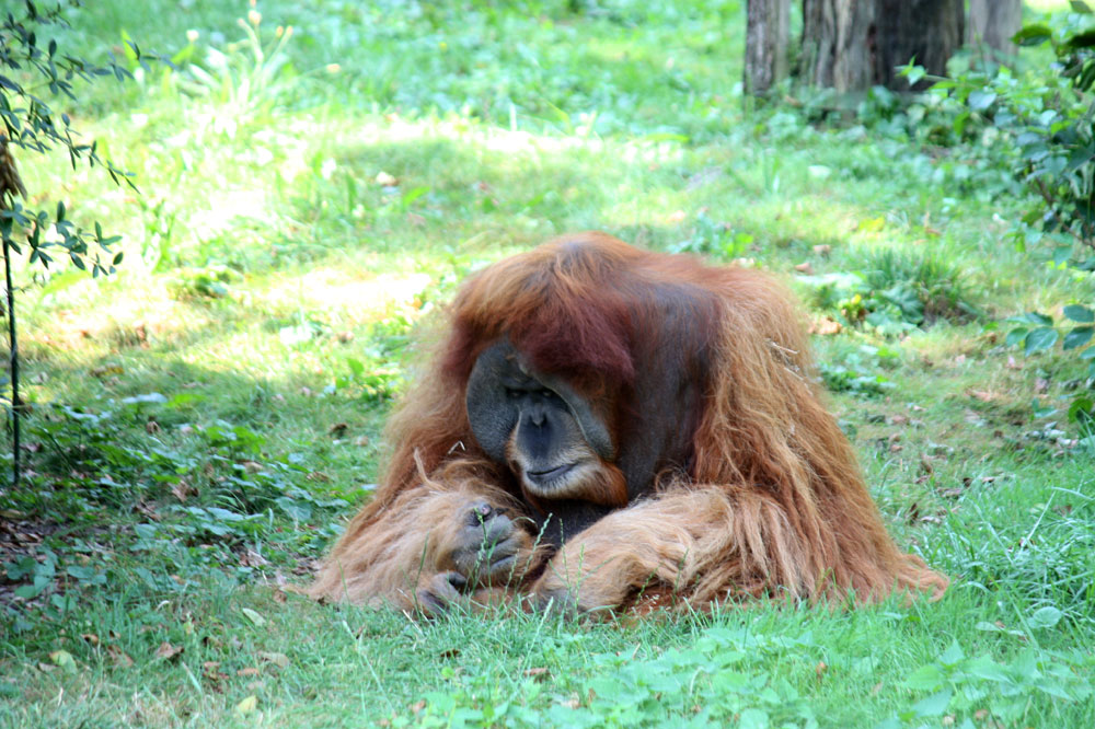 Zoobummel (31) - der Boss will seine Ruhe