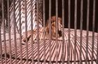 """Zoos in der """"Dritten Welt"""""""