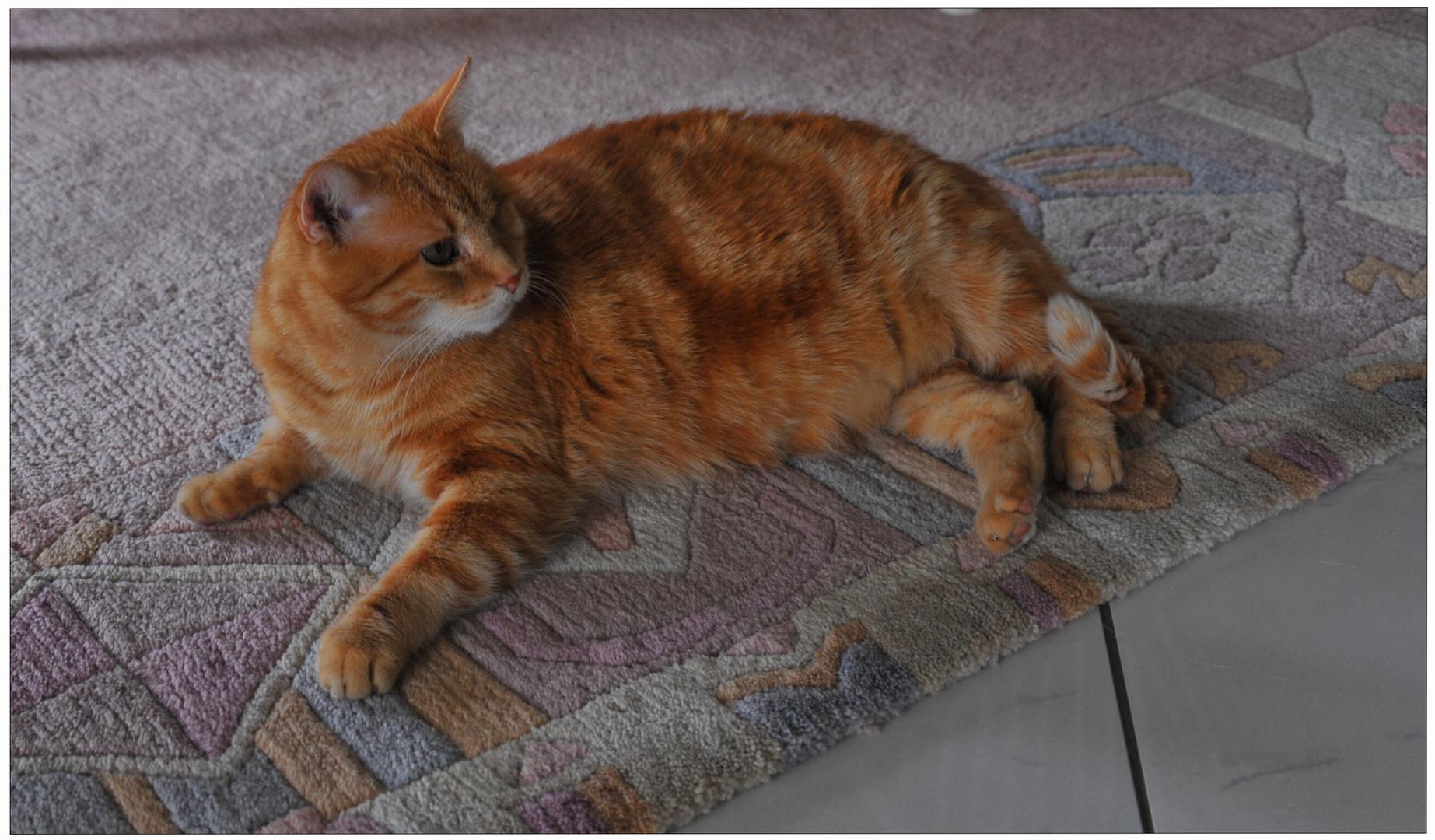 Zorrito también es un gatido muy guapo (Fuchsie ist auch sehr schön)
