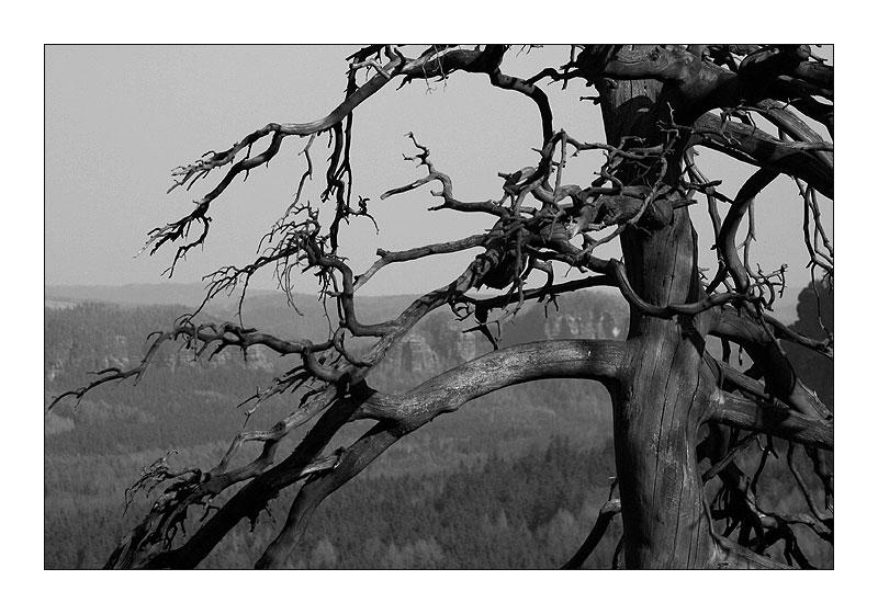 Zschand - Sächsische Schweiz
