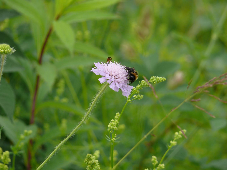 zu Besuch auf der Blüte