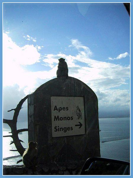 zu den Affen!