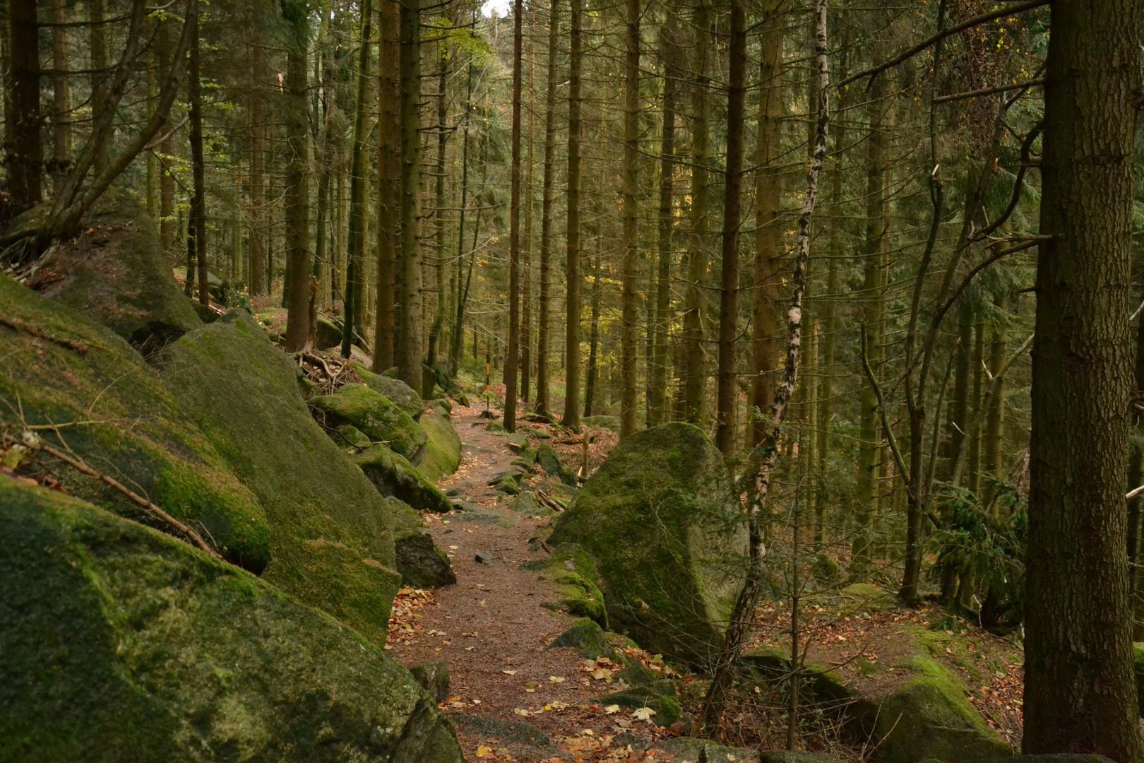 ...zu den Waldmenschen