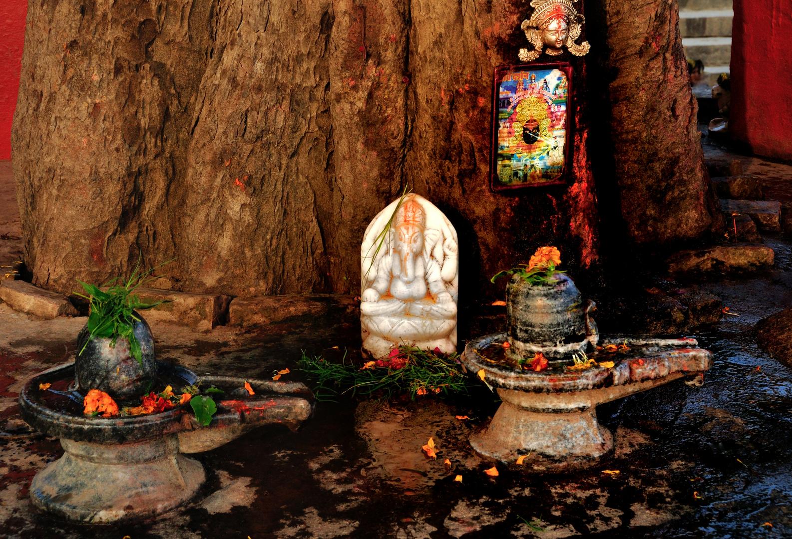 Zu ehren des Gott Ganesha
