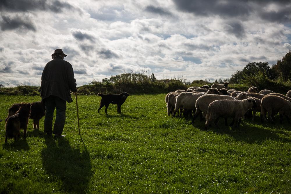 Zu jener Zeit waren Hirten auf dem Felde