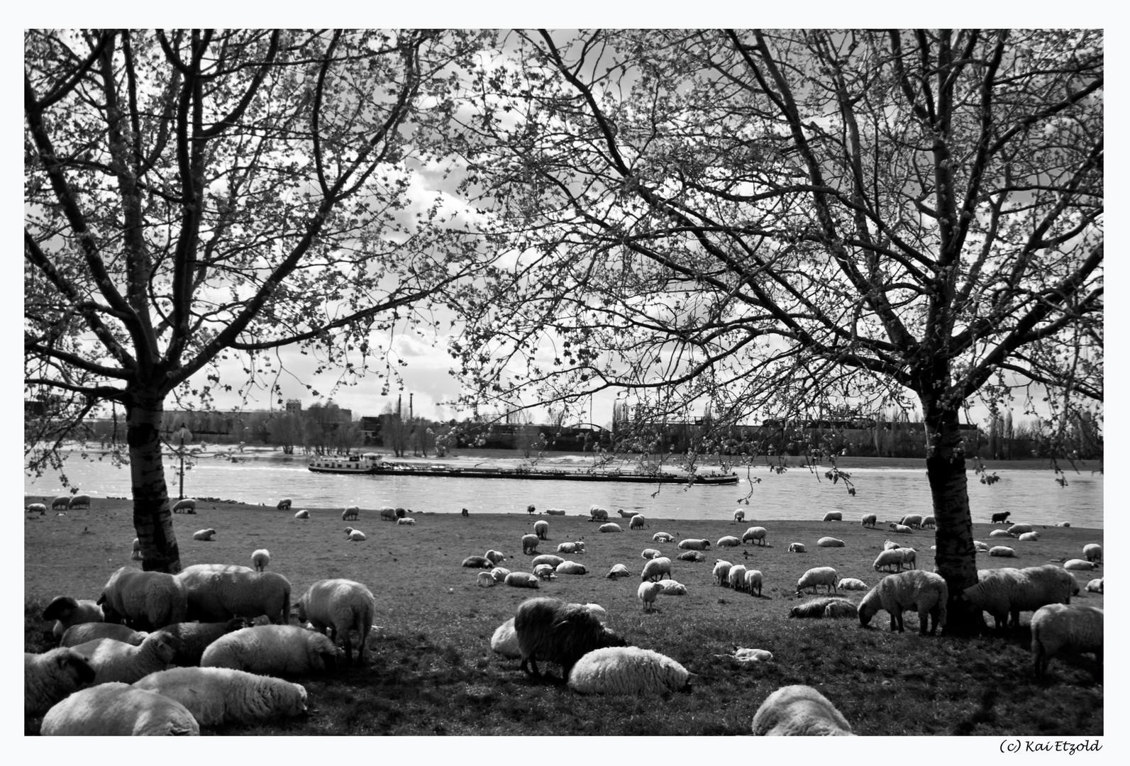Zu Ostern am Rhein in s/w