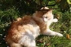 Zu warm für ein Sonnenbad