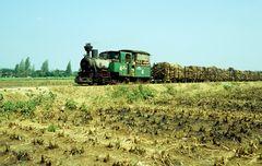Zuckerfabrik PG Sindanglaut, Cirebon (Java, Indonesien), 12.September 1994