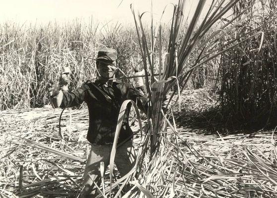 zuckerrohr el salvador