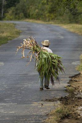 Zuckerrohrbauer auf dem Weg in den Feierabend