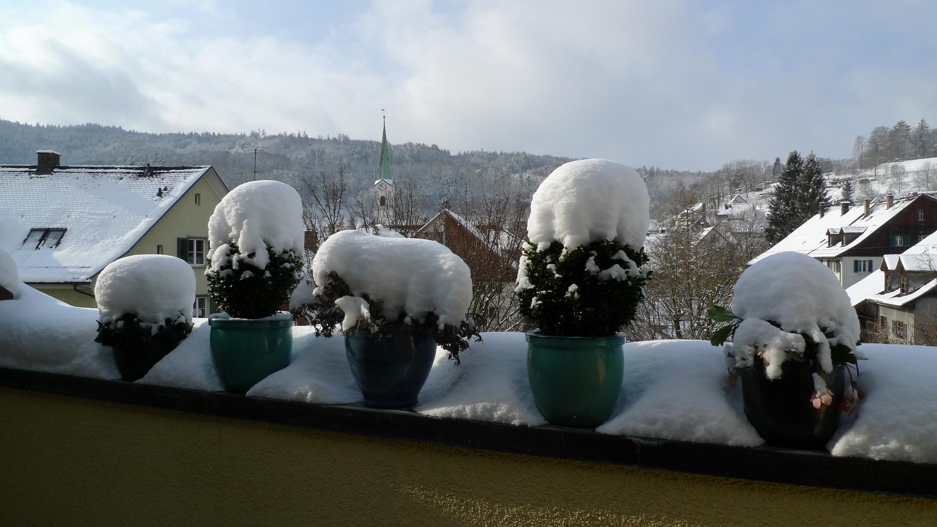 Zürcher Schneehauben