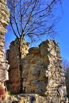 zufällige Entdeckung - neuer Baum auf altem Grund