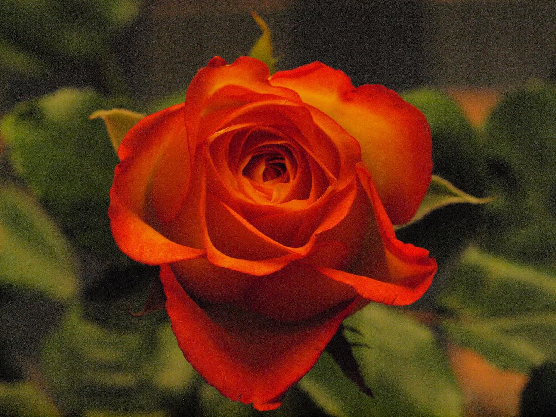 Zufriedenheit im leben bedeutet sehr viel - drum wünsch ich euch ein schönes WE - all die , die mich