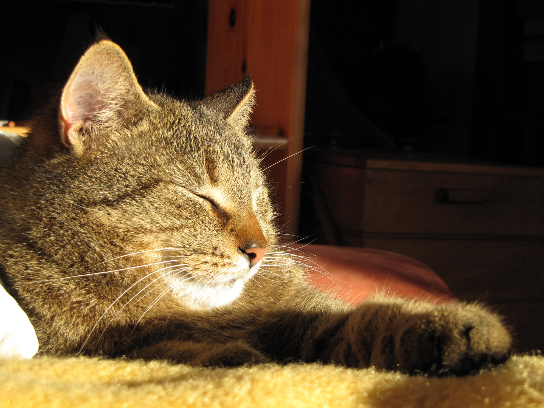 Zufriedenheit in der Sonne ...