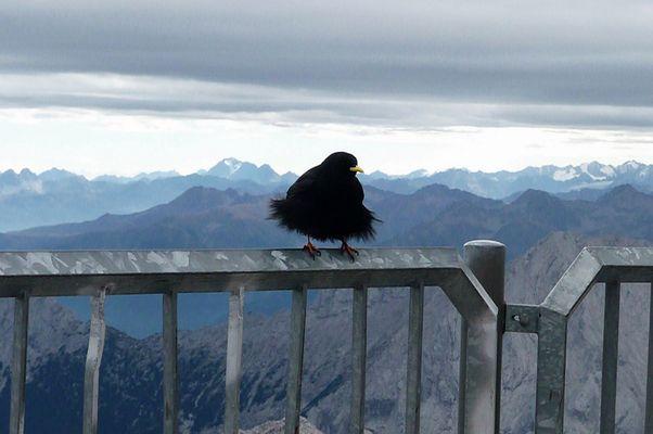Zugspitze, 10 Uhr,  es ist windig. Aber die Frisur, die sitzt.