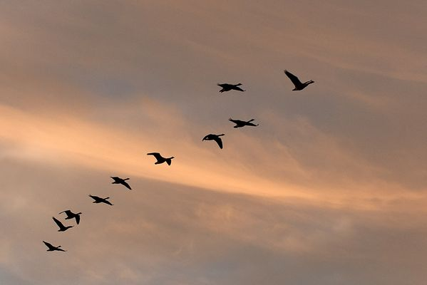 Zugvögel...