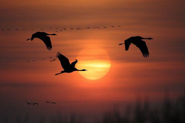 Zugvögel @ 500 mm